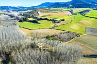 Agricultural area and poplar grove. Aerial view. Ancin area. Navarre, Spain, Europe.