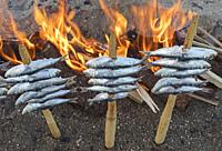 Skewers, or espetos, of sardines roasting on an open fire. Typical dish on the Spanish Mediterranean.