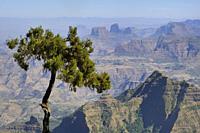 Ethiopia, Amhara region, World Heritage Site, Simien Mountains National Park.