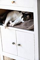 White cat with tortoiseshell ears and paws outstretched, asleep on waffle texture taupe fabric, tucked into a the recess of a contemporary white cupbo...