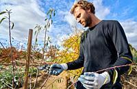 Farmer pruning fruit tree with pruning shears, Agricultural field, Calahorra, La Rioja, Spain, Europe