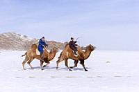 Asie, Mongolie, Ouest de la Mongolie, Montagnes de l'Altai, Village de Kanhman, course de chameaux de Bactriane dans la plaine / Asia, Mongolia, West ...