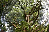 Vegetation of Kimbe Bay, New Britain, Papua New Guinea.