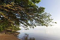 Beach of Kimbe Bay, New Britain, Papua New Guinea.