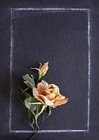 A handmade paper rose on a chalkboard background.
