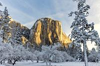 El Capitan in Winter Surroundings Yosemite National Park CA USA World Location.