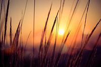 Golden sunrise in the Doñana Nature Park