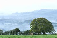 Countryside shrouded in early morning mist viewed from Deerleap on the Mendip Hills, Somerset, England.