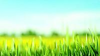 Abstract art backgrounds with green foliage. Environmental backgrounds.