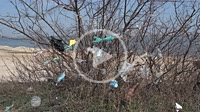 Face masks and plastic debris on branches of trees. Coronavirus (COVID-19) is contributing to pollution, as discarded face masks clutter parks of the ...