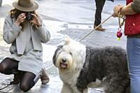 A tourist with a hat kneels to take a picture of a dog on a street in Valencia, Spain