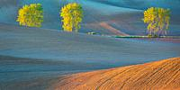 Trees in the fields of Turiec region in northern Slovakia.