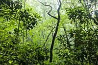 Abstract Tree Patterns - Pisgah National Forest, Brevard, North Carolina, USA.
