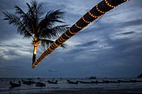 Illeminated leaning coconut tree on Sairee Beach at twilight, Koh Tao, Thailand.