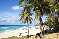 Beach and Coconut trees (Cocos nucifera) in Varadero, Cuba.
