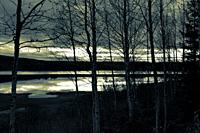 The cloudy evening sky is reflected in a forest lake at dusk. Bare birch trees are standing in the foreground.