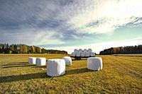 Hay bales wrapped in plastic are lying on a stubble field in late summer, waiting for transport. Västernorrland, Sweden, Europe.