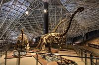 Kunming, China - May 17, 2020: Dinosaur fossils displayed at the Lufeng Dinosaur Valley Museum in Yunnan.
