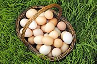 Basket with eggs.