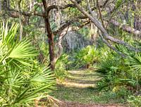 Path in Oscar Scherer State Park in Southwest Florida in Osprey Florida.