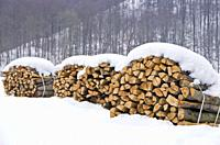 Logs piled up and bunched.