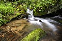 Cascade on Rockhouse Creek - Pisgah National Forest, Brevard, North Carolina, USA.