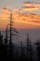 Sunrise over a Dying Forest at Clingmans Dome in the Great Smoky Mountains National Park.