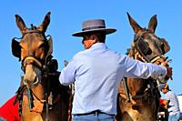 Muleteer with two mules. Pilgrimage of El Rocío embarking to cross the Guadalquivir river. Sanlúcar de Barrameda. Cádiz province. Andalusia. Spain