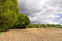 View on a field with tracks under a dramtic sky near the Dutch village Bornerbroek in the province Overijssel.
