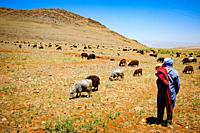 Shepherds with their flock of goats and sheep in the Atlas Mountains, Morocco.
