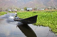 Canoe surrounded by floating gardens, Maing Thauk village, Inle lake, state of Shan, Myanmar, Asia.