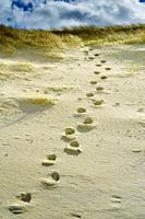 Footsteps in the sand on the beach at Ardroil, Isle of Lewis, Outer Hebrides, Scotland.