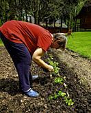 Woman planting celery.