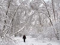 Senior woman walking in Bitsevski Park (Bitsa Park) after a heavy snowfall. Moscow, Russia.