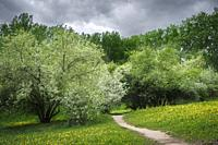Path in a blossoming spring park on a cloudy day before the rain.
