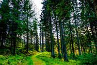 The forest in autumn near Loch Drunkie, Loch Lomond & The Trossachs National Park, Scotland.