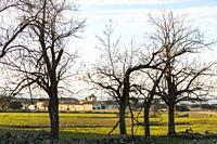Almond trees. Paraje de Botas, Almansa, Albacete province, Castile-La Mancha, Spain