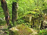 Antique mill ruins at Mir cascade site. Springtime at Santa Maria de Besora village countryside. Osona region, Barcelona province, Catalonia, Spain.