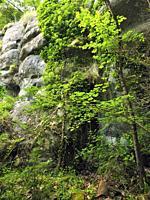 Springtime at Mir cascade site. Santa Maria de Besora village countryside. Osona region, Barcelona province, Catalonia, Spain.