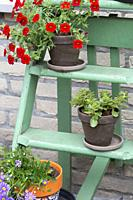 Various colorful flowers in pot on small green wooden stairs in the garden for decoration, close-up.