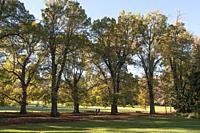 Autumn morning in the Fitzroy Gardens, Melbourne, Australia.