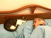 Man in bed with his cat.