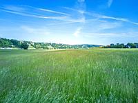 Urban scenery with Elbe riverside meadows in Johannstadt, Dresden, Saxony, Germany.