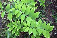 Leaves, undergrowth,.
