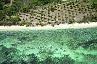 Aerial view of coco palms in Viti Levu coast beach, Fiji.