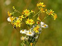 pretty summer flowers in a meadow.