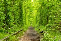 """Ukraine. Spring. Railway in the dense deciduous forest. """"""""Tunnel Of Love""""""""."""