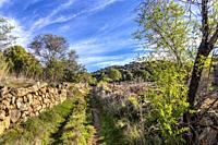 Road with a stone fence and conifers in Cebreros. Avila. Spain. Europe.