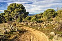 Road with a stone fence and conifers in the country of Cebreros. Avila. Spain. Europe.