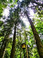 Forest that runs along the hamlet of Cutigliano, Pistoia, Abetone, Italy, Europe.